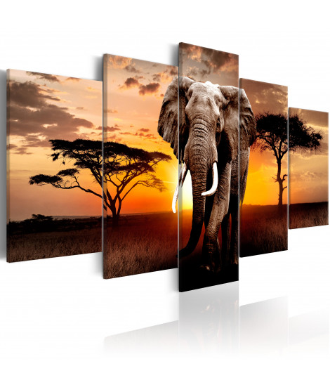 Tableau - Elephant Migration
