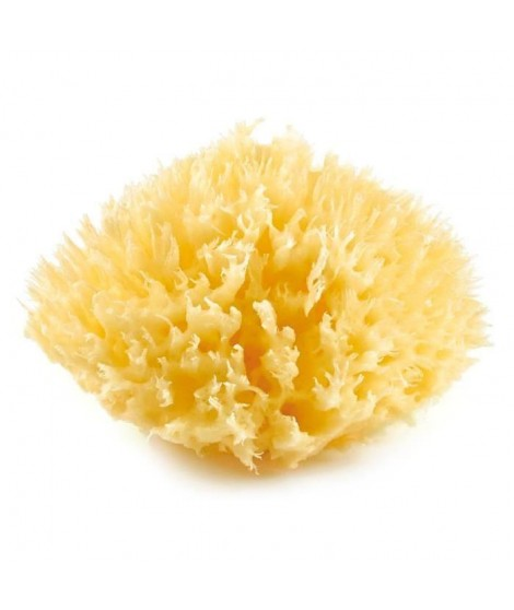 THERMOBABY Eponge de Mer Méditerranée Honeycomb Taille 10